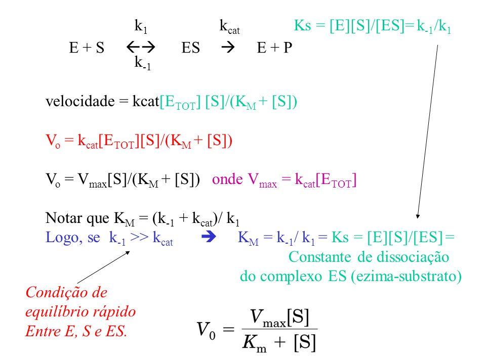 k1 kcat. Ks = [E][S]/[ES]= k-1/k1. E + S  ES  E + P. k-1. velocidade = kcat[ETOT] [S]/(KM + [S])
